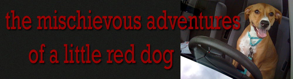 the mischievous adventures of a little red dog